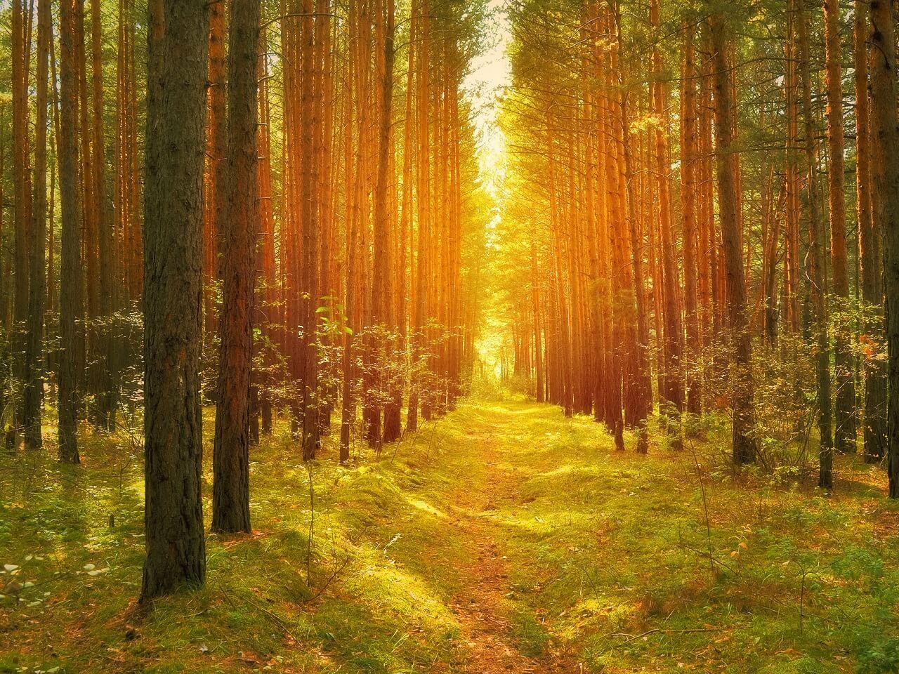 lothlorien golden woods